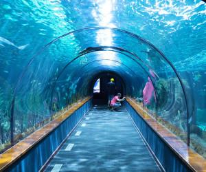 aquário de londres
