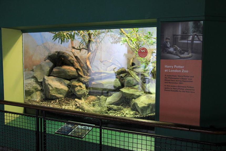 Harry Potter em Londres | London Zoo- Estrela Tour